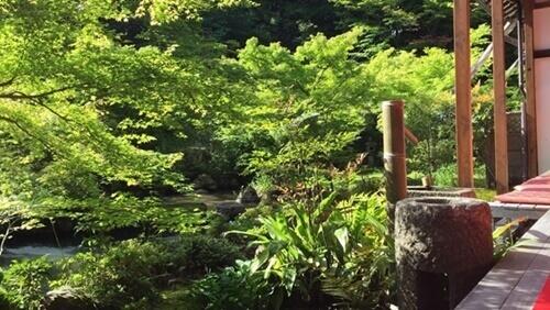 実相院の「山水庭園」、縁側から撮影した写真。緑が鮮やかでした。